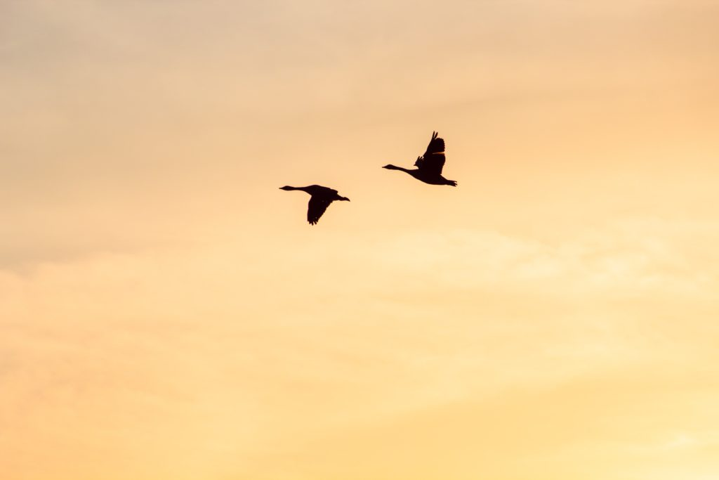 EDGI's Take on Proposed Revisions Undercutting the Migratory Bird Treaty Act
